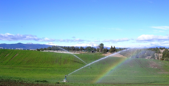 Pasture irrigation using reel sprinklers and SR75 Nelsons