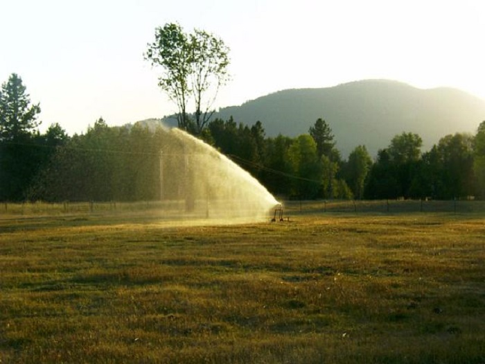 Smith Irrigation Equipment traveling sprinkler irrigates wooded pastures in Montana.